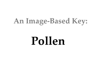 how to kill pollen at home